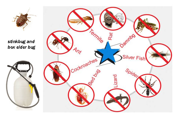 Pest Control Service in Bangladesh