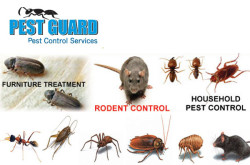 Pest Guard pest control service - Dhaka, Bangladesh.