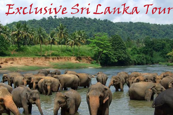 Exclusive Sri Lanka tour