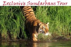 Exclusive Sundarbans tour by A2z tour