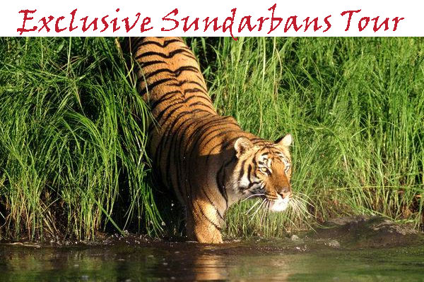 Exclusive Sundarbans Tour
