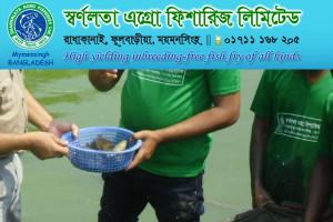 Fish Hatchery in Bangladesh