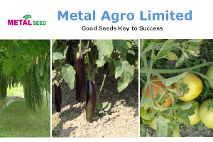 Metal Seed - Metal Agro Limited