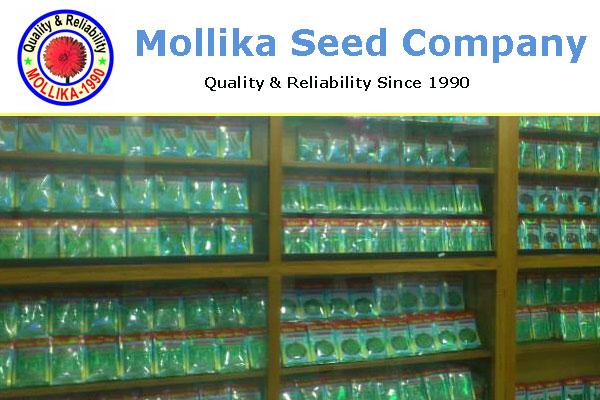 Mollika Seed Company