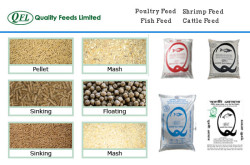 Quality Feeds Limited - poultry, fish, shrimp and cattle feed