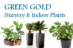 GREEN GOLD Nursery & Indoor Plants