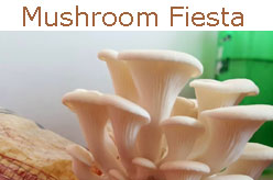 Mushroom Fiesta - Mushrooms at your doorsteps