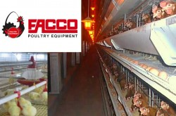 FACCO Poultry Equipment - Modern Poultry Equipment Manufacturer