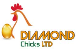 Diamond Chicks Ltd